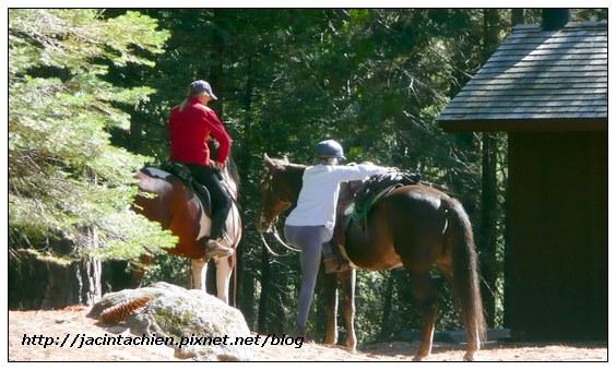 Mariposa Grove - horse