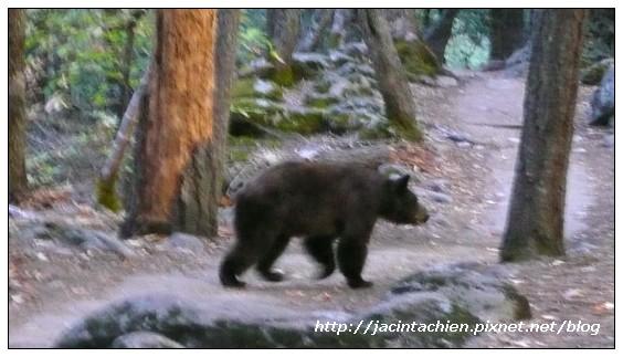 Yosemite優勝美地-bear