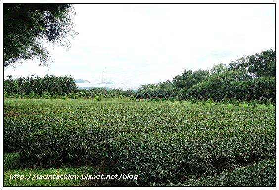 壹等賞觀景茶園-茶葉園