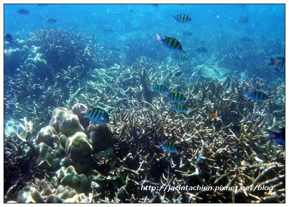 2010 Phuket -DSCN0025-f