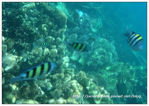 2010 Phuket -DSCN9951-f.jpg