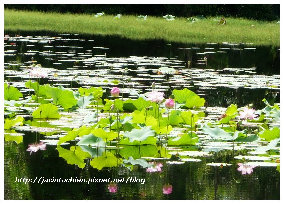2010 Phuket -P1140669-f.jpg