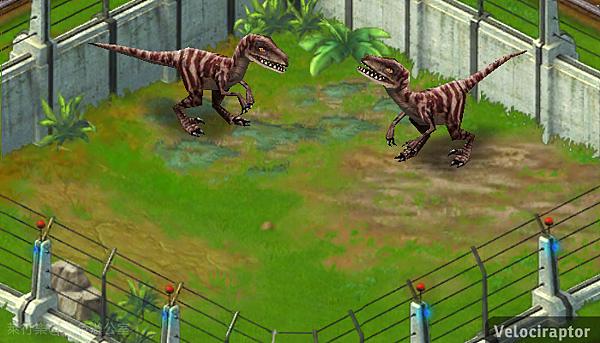Velociraptor_迅猛龍_黑色辦公室