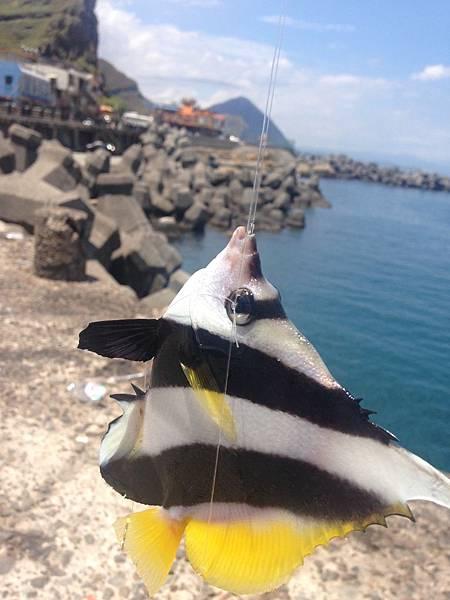 014鼻頭魚港..JPG