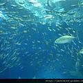 002-25-02-美之海水族館 (247).JPG