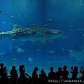 002-24-02-美之海水族館 (223).JPG