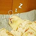 貓睡覺3.jpg