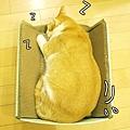 貓睡覺4.jpg