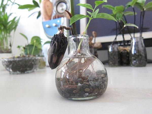 03玻璃瓶裝水及少量麥飯石.JPG