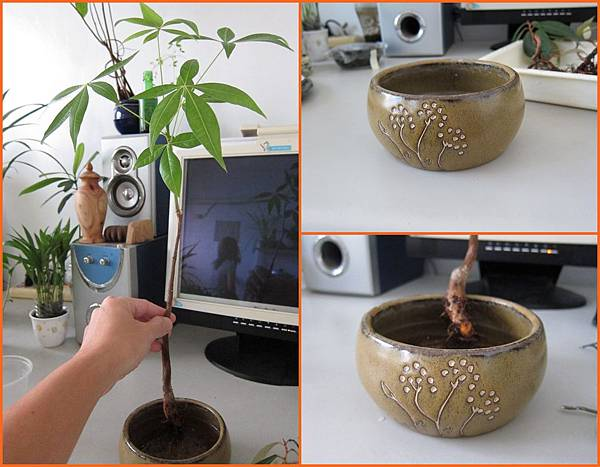 03大棵的植物先種植物材料準備.JPG