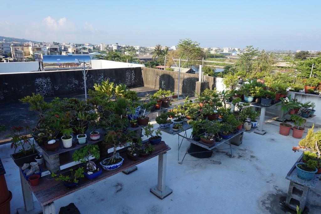 01家儀的頂樓花園.JPG