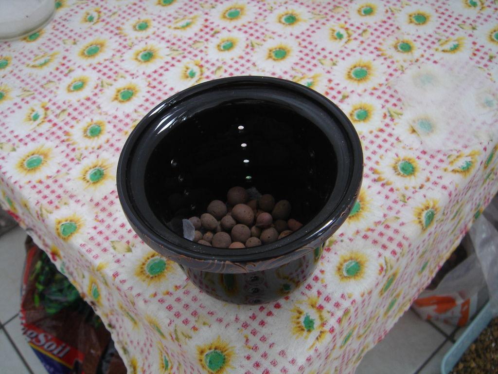 05準備一個小盆子,圖中盆子是廢物利用,朋友送的的泡茶過濾杯,很透氣喔.JPG