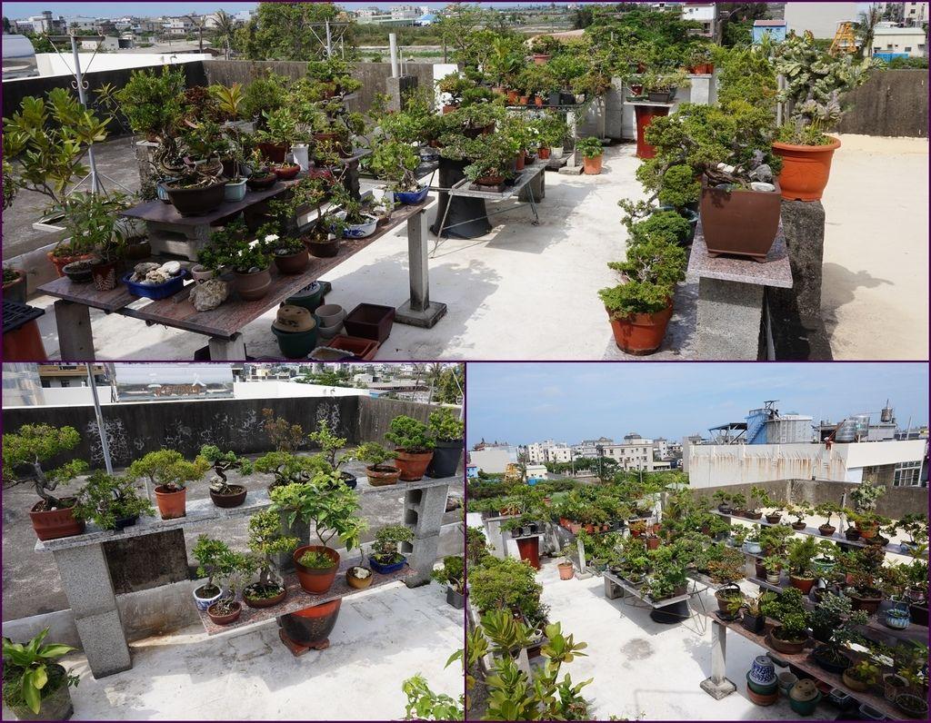 10頂樓花園~看起來很壯觀~.jpg