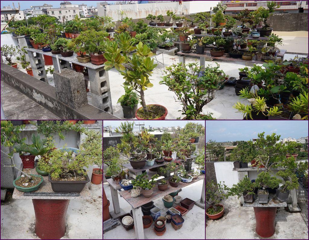 13頂樓盆栽~大致上種得不錯~.jpg