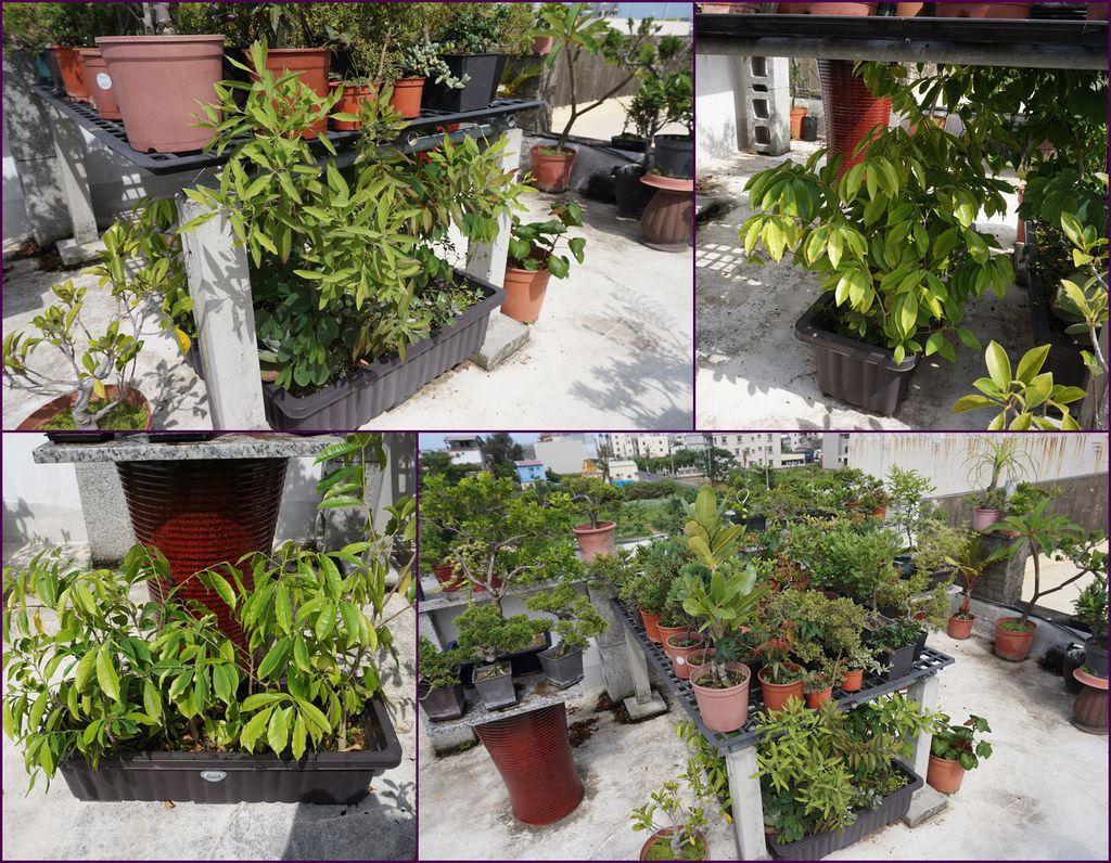 14還有很多待處理的植栽~培育中~.jpg