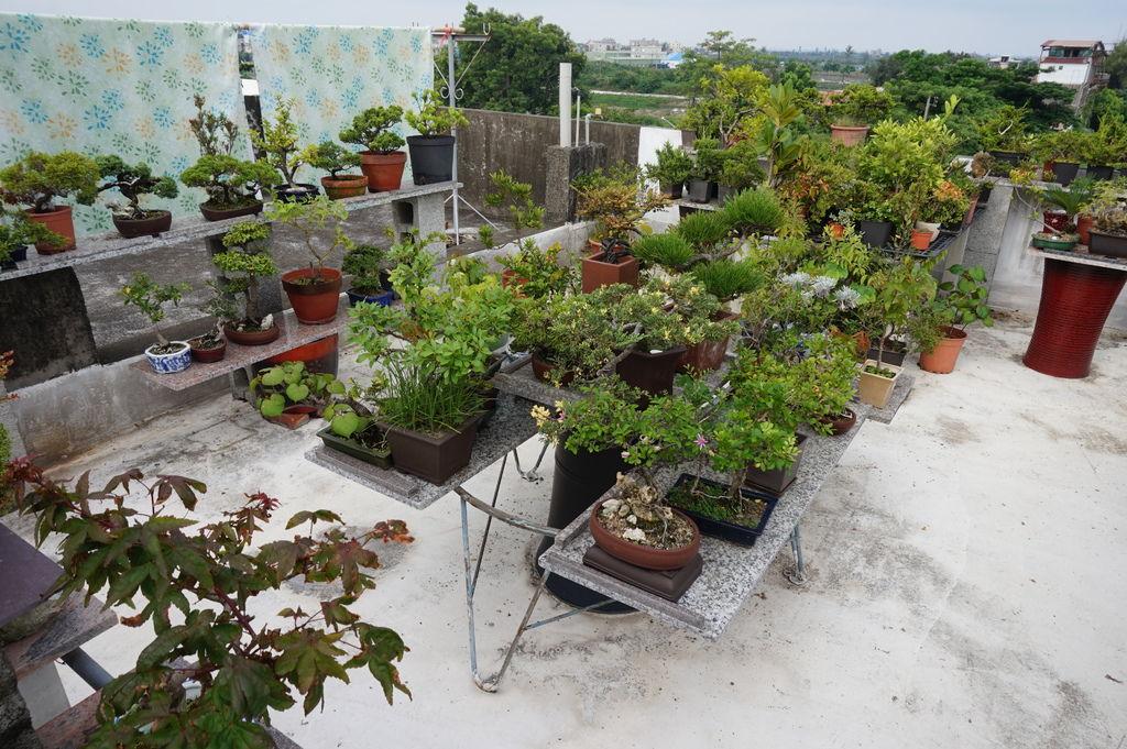 01家儀的頂樓花園~颱風來臨前準備.JPG