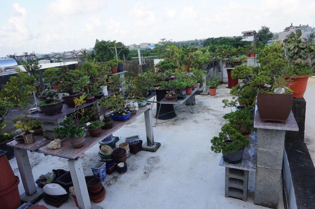 01頂樓花園~颱風過後的復原與打掃(20170806拍攝).JPG