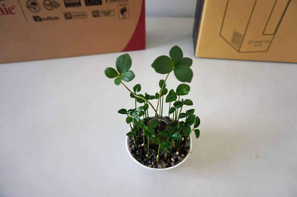 01墨西哥鐵樹與柚子~種子組合盆栽.JPG