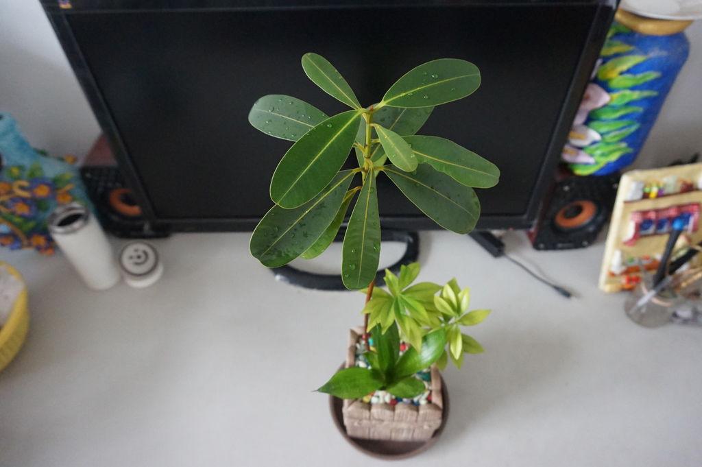 11簡單的一盆~組合盆栽.JPG