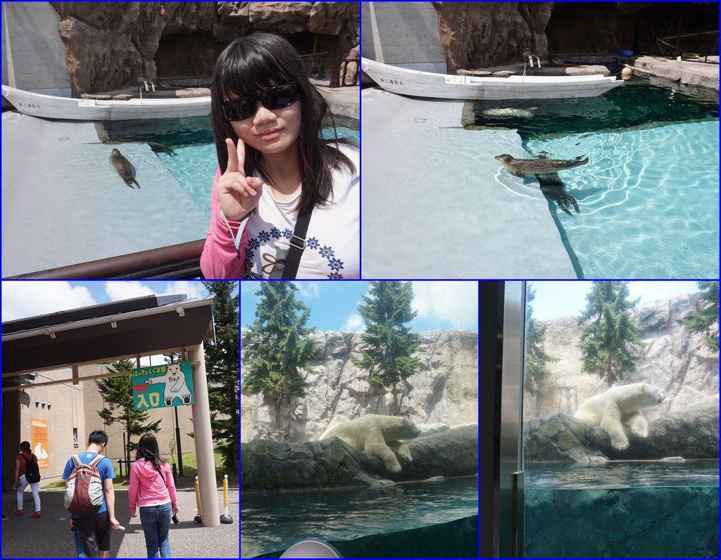 09海豹及北極熊都是旭出動物園的明星動物.jpg