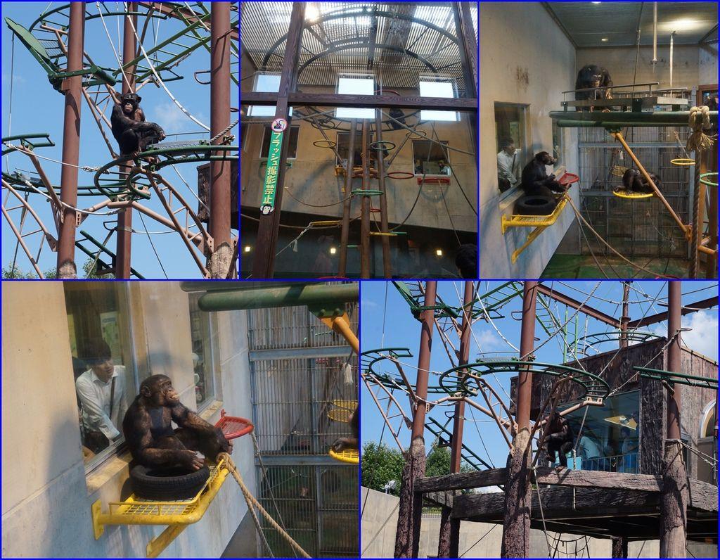 13猩猩有很多活動設施~可以爬來爬去~.jpg