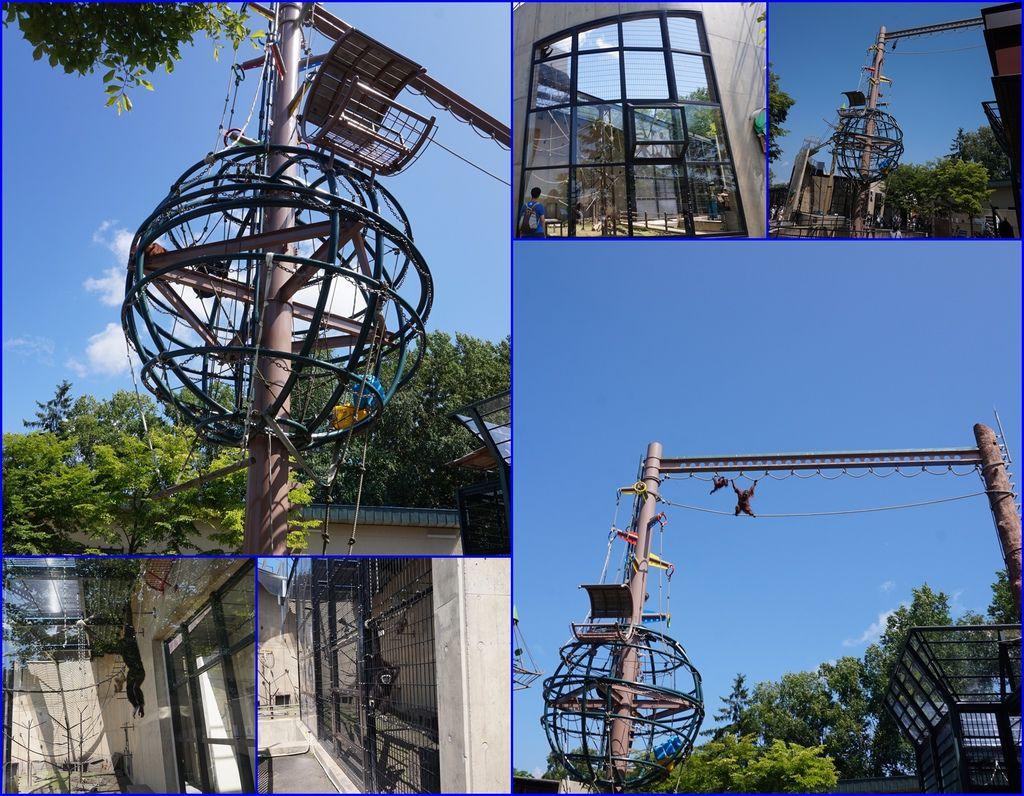 14旭山動物園~猴子專區~好多設施可以玩耍~.jpg