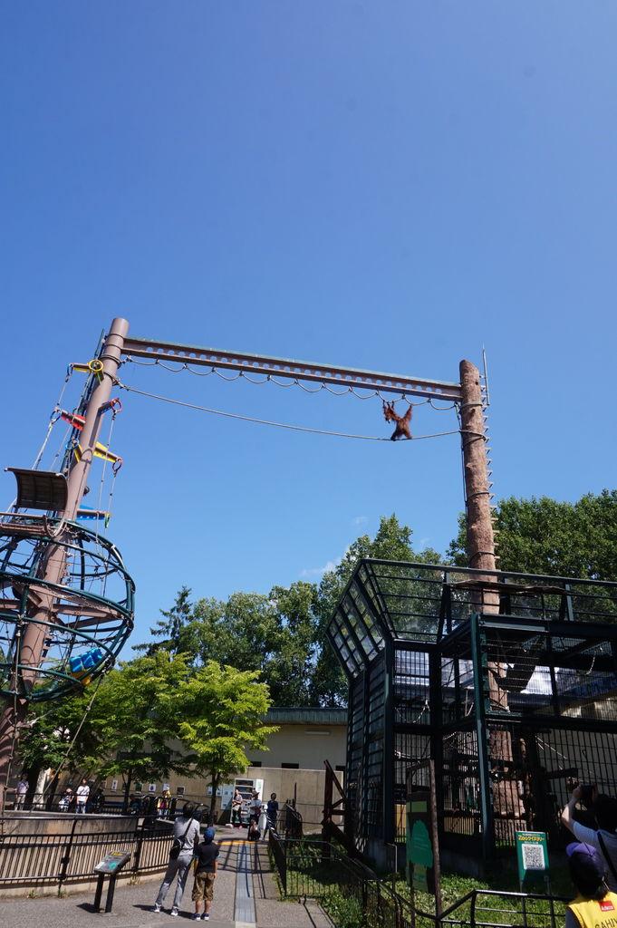 15大猴子帶者小猴子過高架橋~驚險萬分.JPG