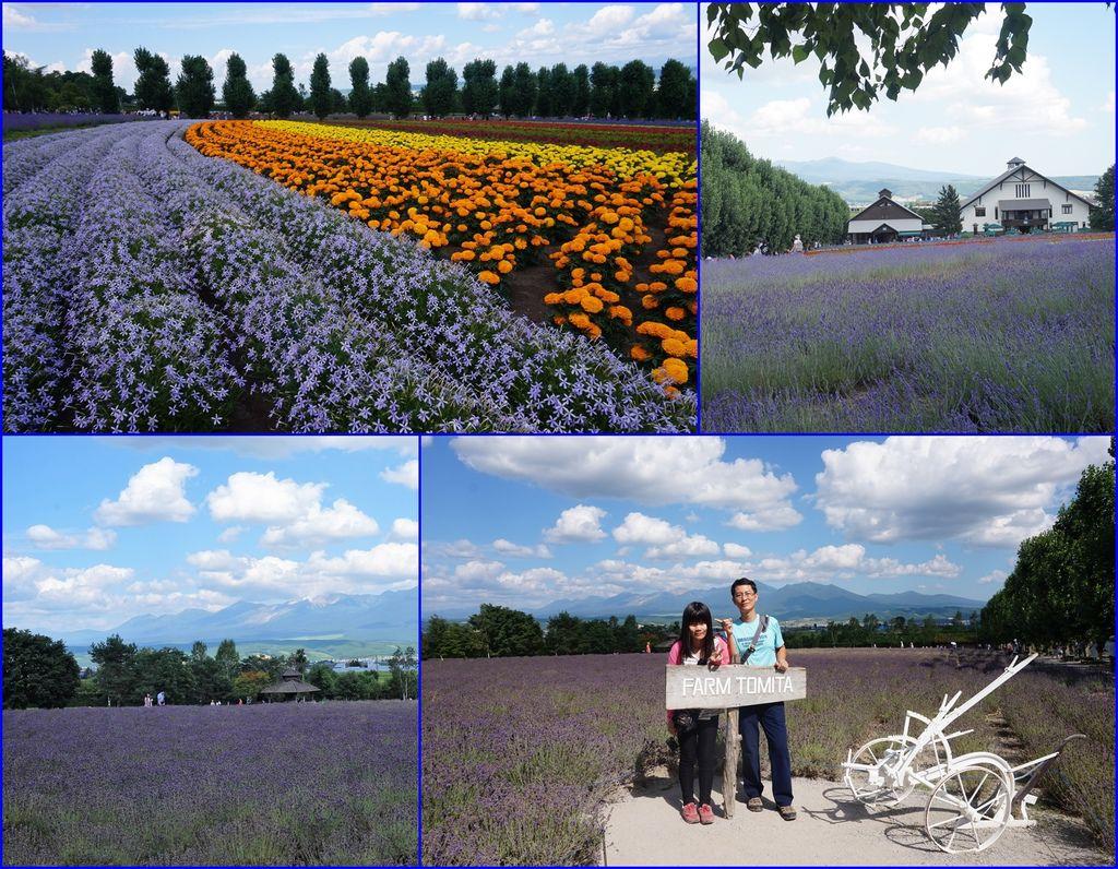 21富田農場~到處都有美景可以拍~可惜薰衣草花少了一點.jpg