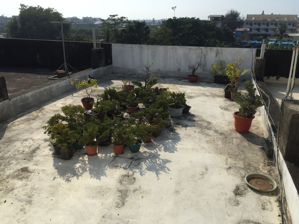 01舊家頂樓花園盆栽~大約剩下一半生20181215拍攝).JPG