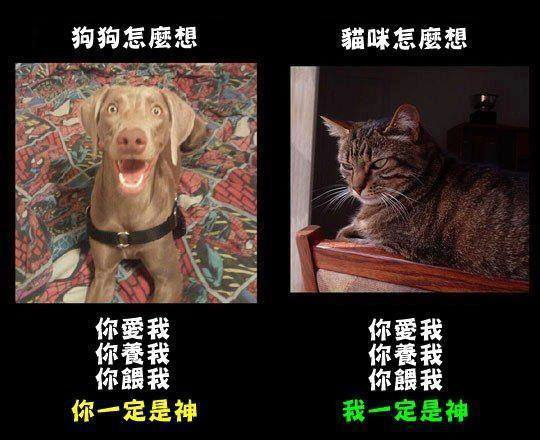 貓狗的想法不一樣