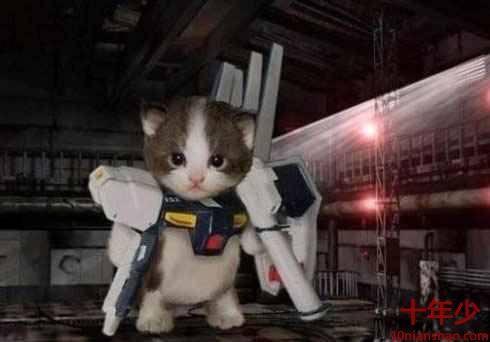 變型金剛貓