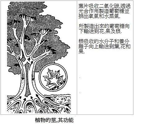 植物的莖及其功能