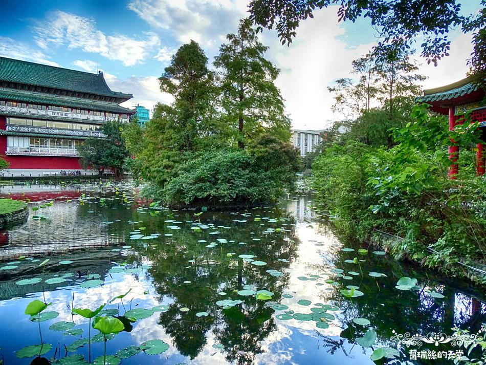 台北植物園鳥類拍攝 (62).jpg