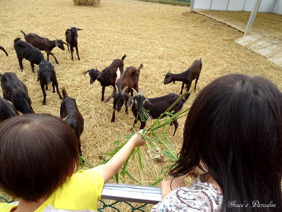 新屋景點-桃園農業博覽會 (66).jpg