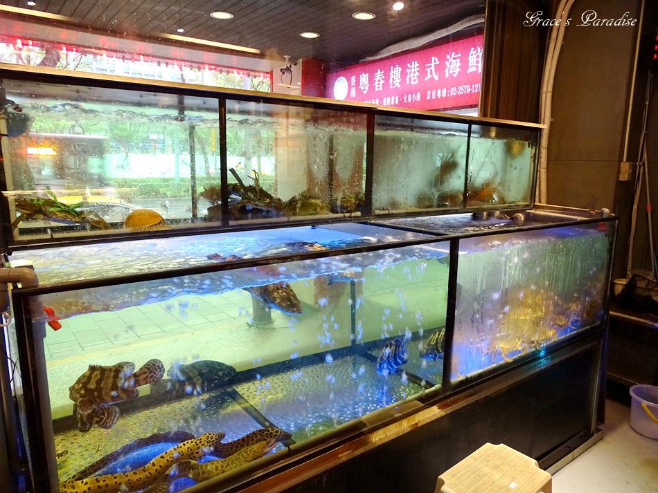 松山宴客餐廳-粵春樓港式海鮮餐廳 (32).jpg