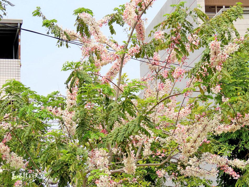 台南景點-新營美術園區 (13).jpg
