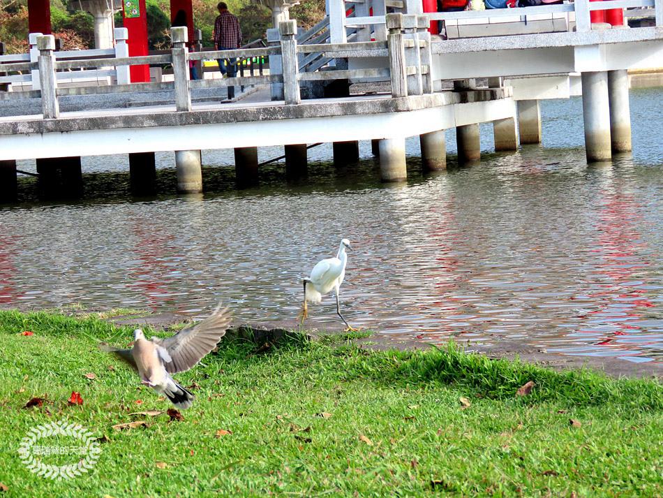 內湖景點-大湖公園 (35).jpg