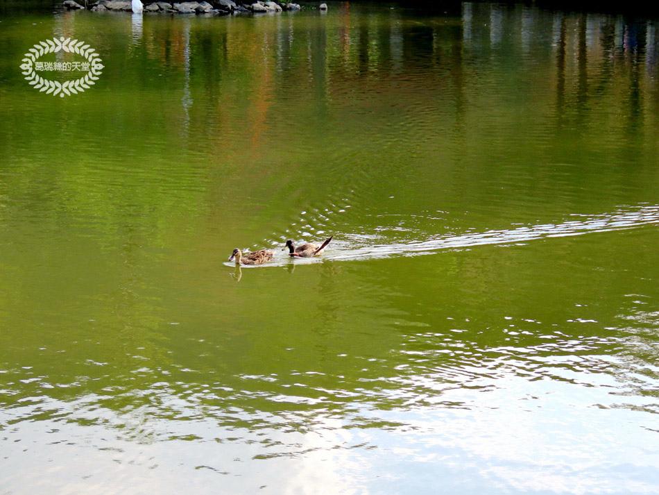 內湖景點-大湖公園 (39).jpg