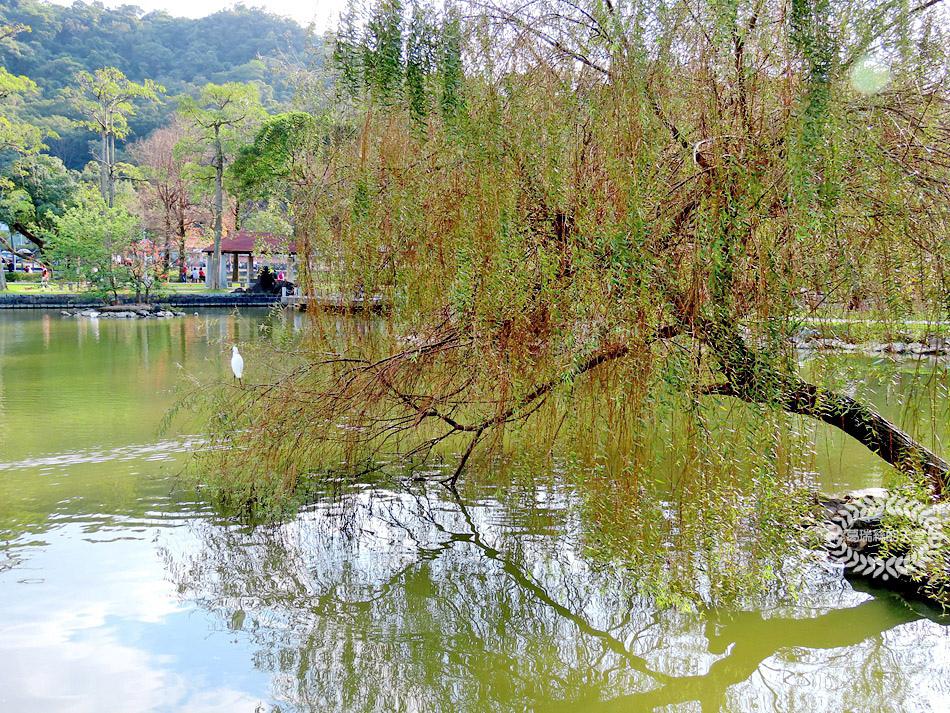 內湖景點-大湖公園 (40).jpg
