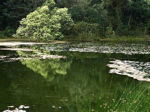 福山植物園人工湖