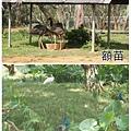 新竹六福村19