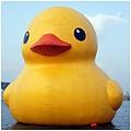 基隆黃色小鴨1