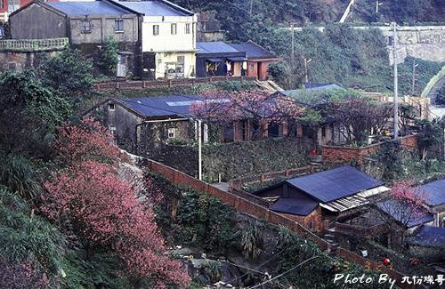 山城櫻花.jpg
