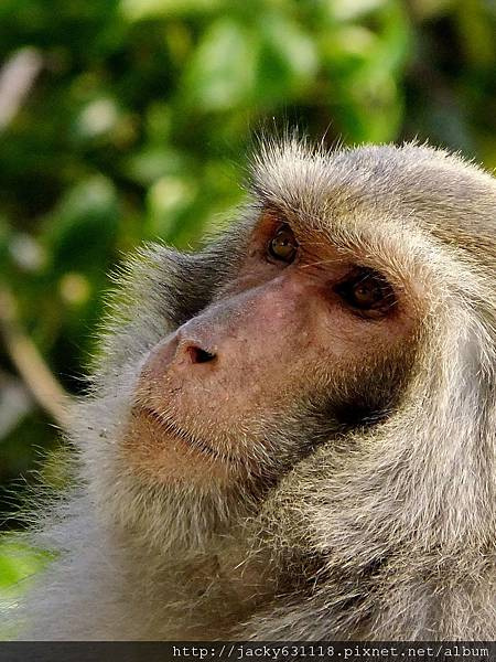 柴山獼猴06.jpg