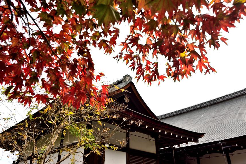 京都嵐山 (39).JPG