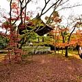 金閣寺 (11).JPG