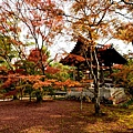 金閣寺 (12).JPG