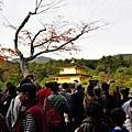 金閣寺 (14).JPG
