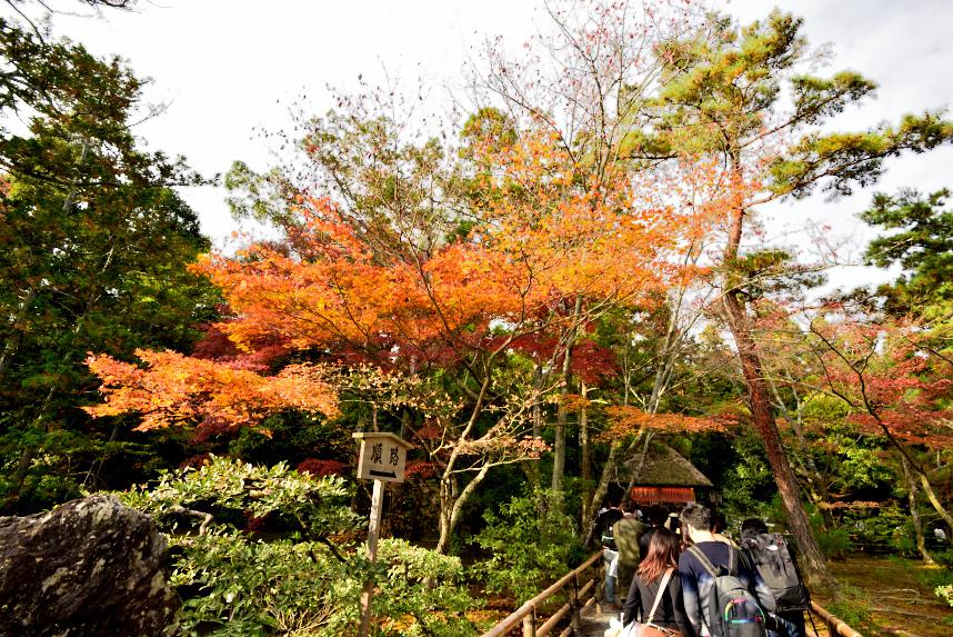 金閣寺 (24).JPG