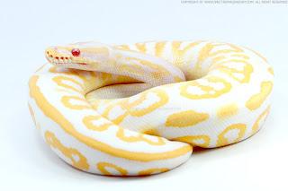 黑粉彩白化